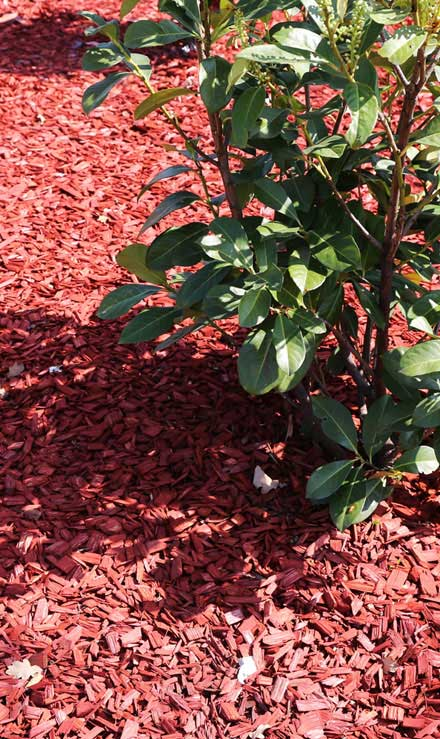 Evergreen Lawncare and Landscape Inc. Mulching