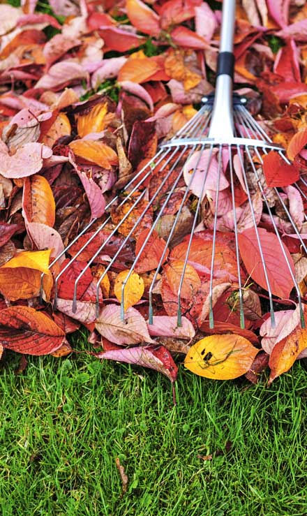 Evergreen Lawncare and Landscape Inc. Fall Clean Up